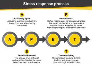 The stress response is the primary cause for low productivity